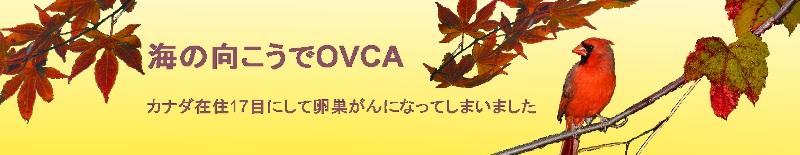 海の向こうでOVCA